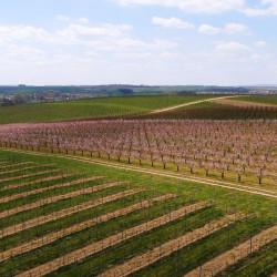 Putování po vinicích